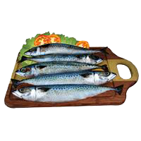 Peixe Cavalinha
